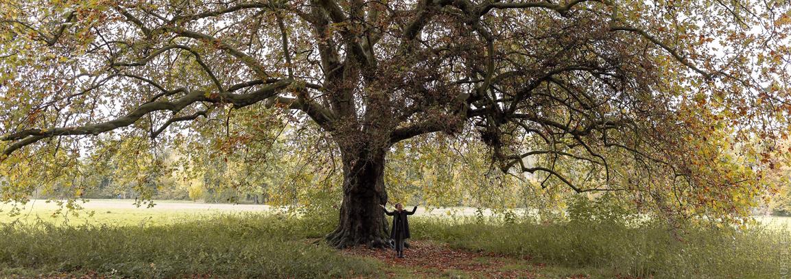 Le pouvoir secret des arbres